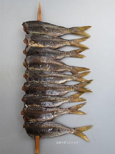 お魚三昧日記