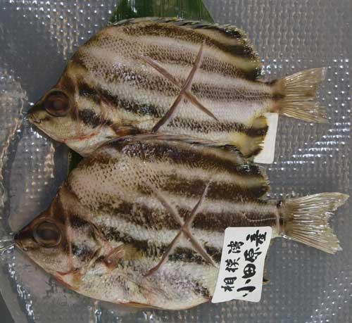 kagokakidai111.jpg