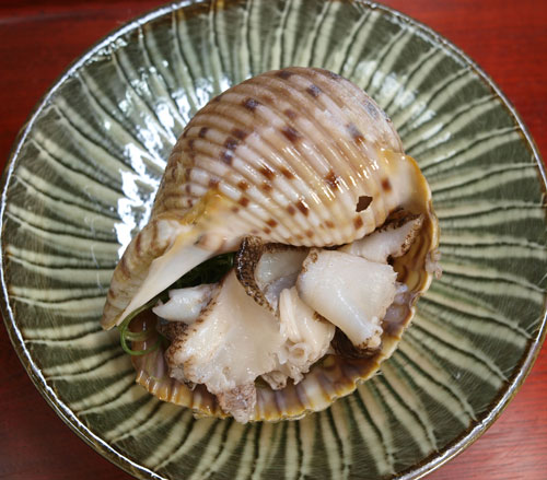 yatusirogai09.jpg